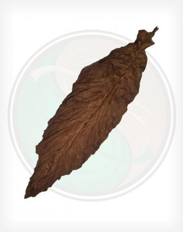 Pennsylvania Broad Leaf Wrapper Tobacco Leaf